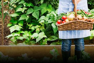 """ASAJA Murcia considera una """"incongruencia"""" que la CE obligue al sector a cofinanciar el 20% de las campañas de promoción de hortalizas"""